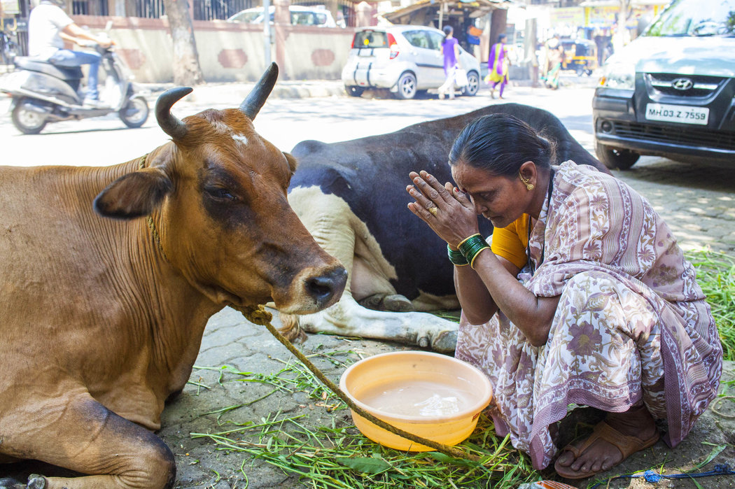 Punjabi Boy And Girl Wallpaper Saving The Cows Starving The Children The New York Times