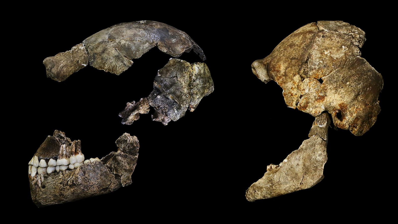 Tiny Brains Of Extinct Human Relative Had Complex Features The New York Times