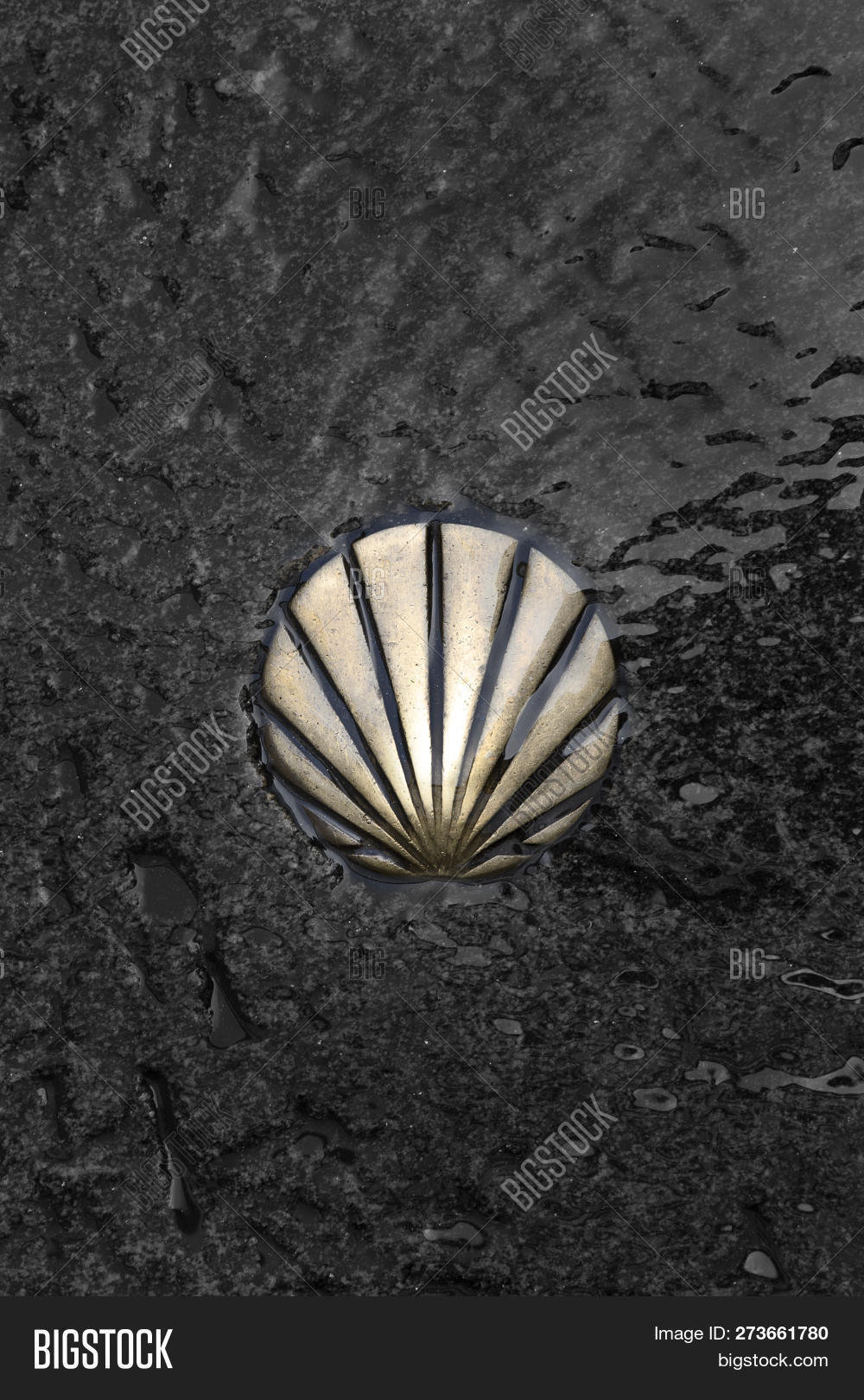 Camino Santiago Shell St James Way Shell Image Photo Free Trial Bigstock