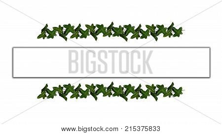 Green Leaves Garden Image  Photo (Free Trial) Bigstock - frame for cards
