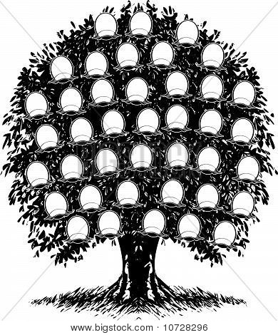 Genealogy Tree Images, Illustrations  Vectors (Free) - Bigstock