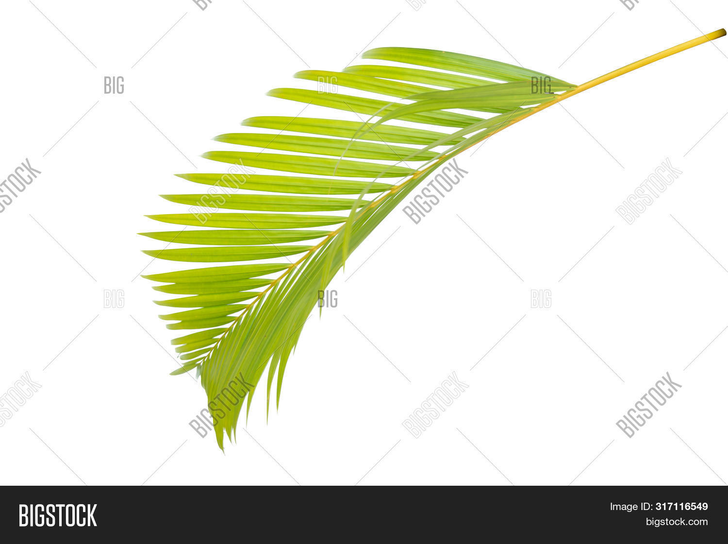 Yellow Palm Leaves Image Photo Free Trial Bigstock