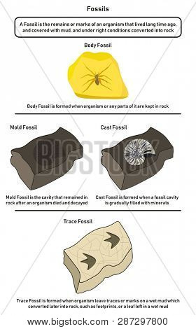 Fossils Infographic Image  Photo (Free Trial) Bigstock