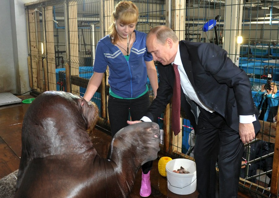 If you haven't shook hands with a legit walrus, your name is something other than Vladimir Putin.