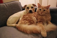 Why Cats Are Better Than Dogs - Business Insider