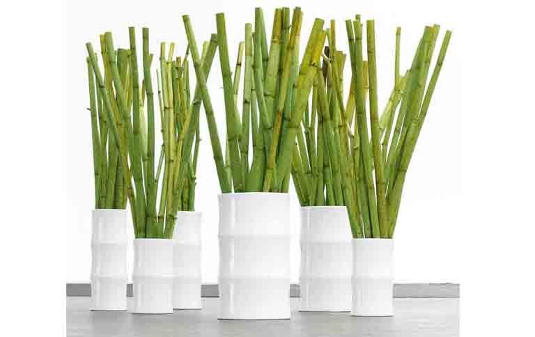 Schoener Wohnen Farbe Bamboo