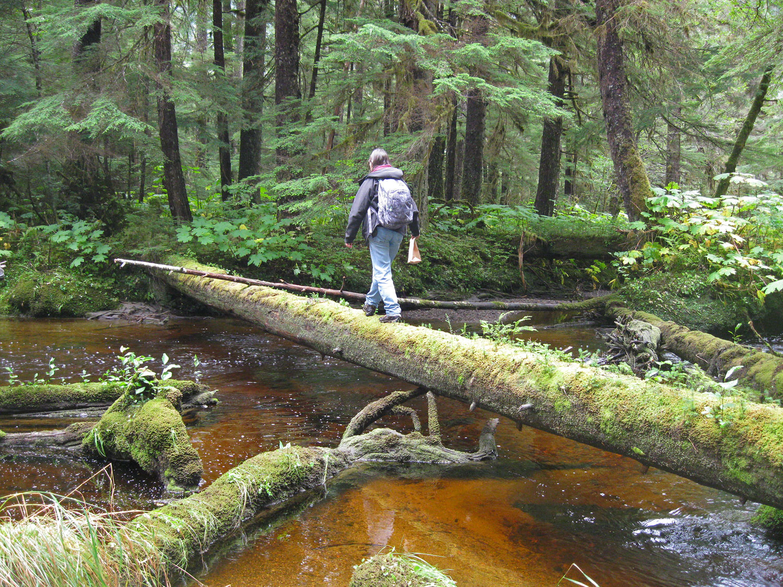 Rustic Fall Wallpaper Forest Bridges Alaska Floats My Boat