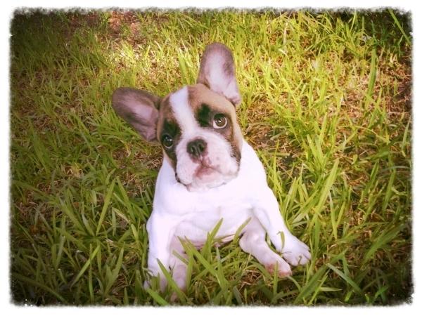 Services  Rates for Austin pet sitter, dog walker, in home dog care