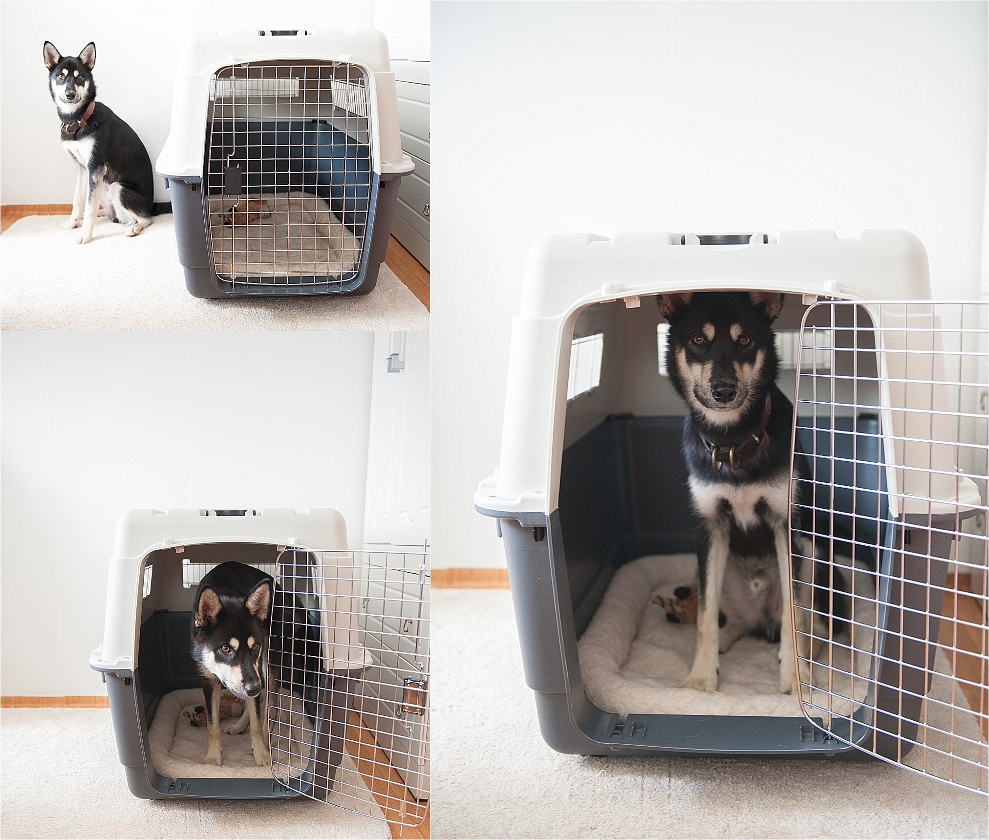 Travel Air Kennel Crate Training How To Choose An Airline Approved Crate