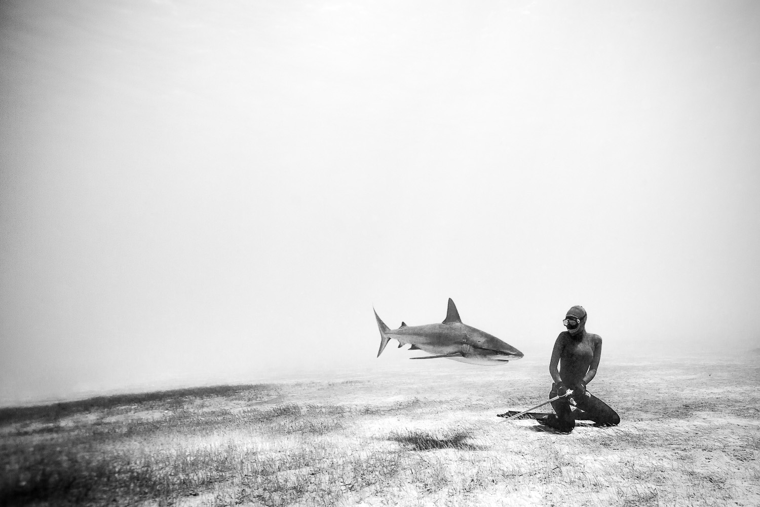 Black White Square Wallpaper Freediving With Sharks One Ocean One Breath