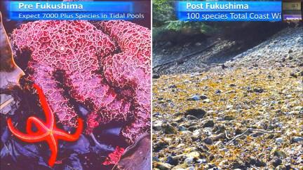 Fukushima Story 258.jpg