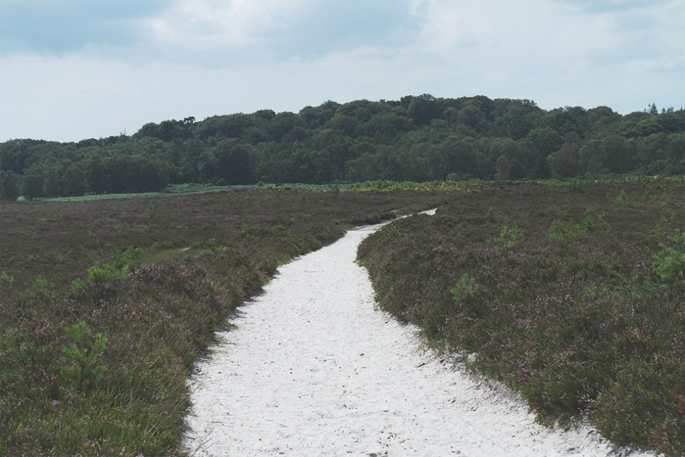 Crockford Clump, the New Forest