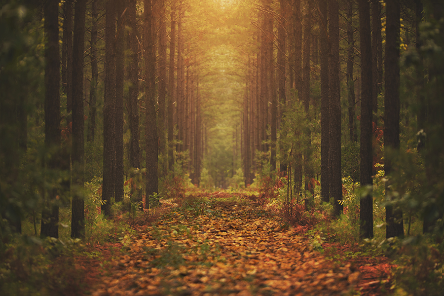 Free Early Fall Wallpaper Kcc Late Summer Early Fall Digital Backgrounds W Light