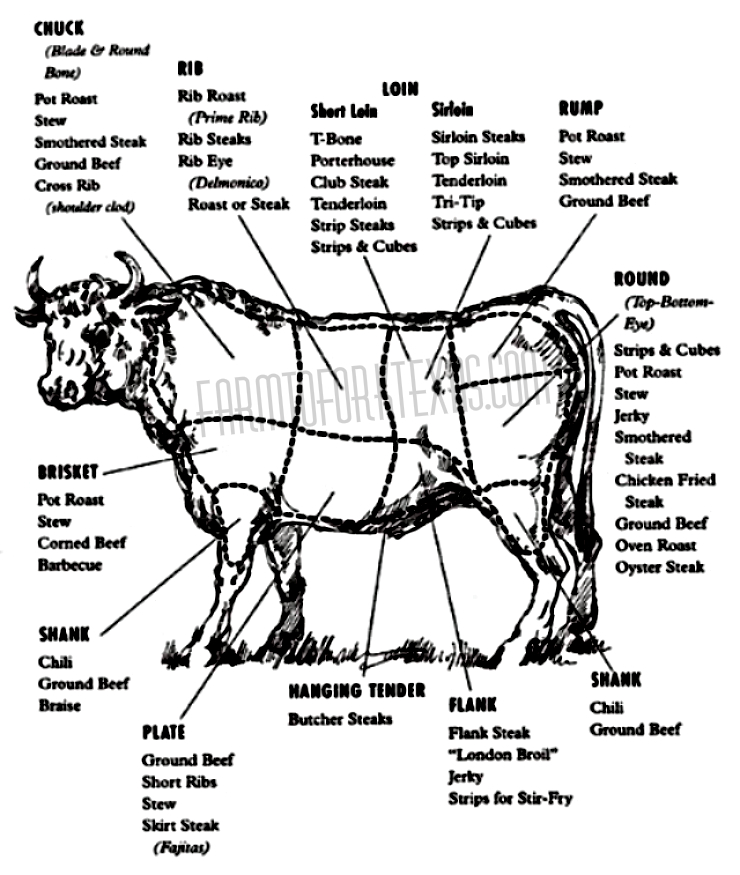 simple cow meat cut diagram