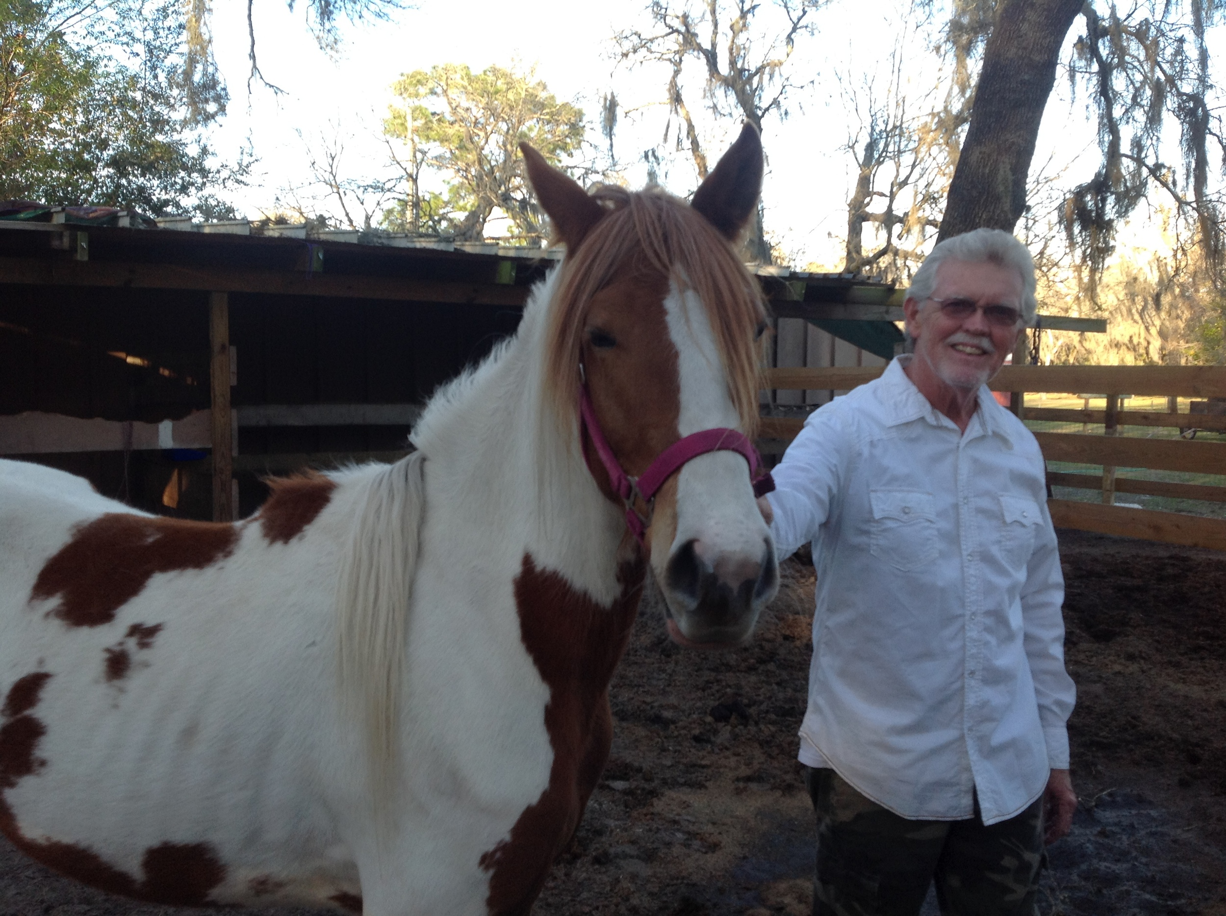 Meet our horses \u2014 Promise Land Painted Ranch