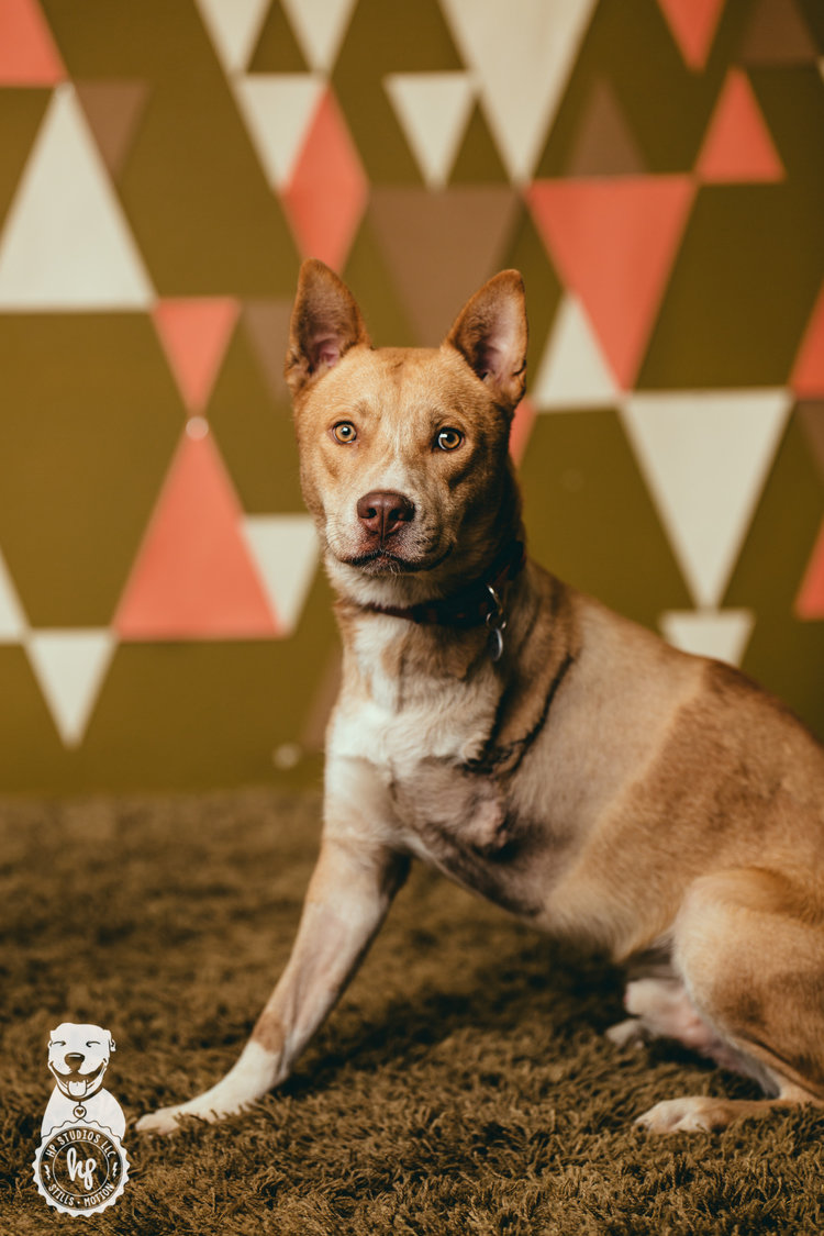 Modish Crazy Dog Our Stories Fresno Humane Animal Services