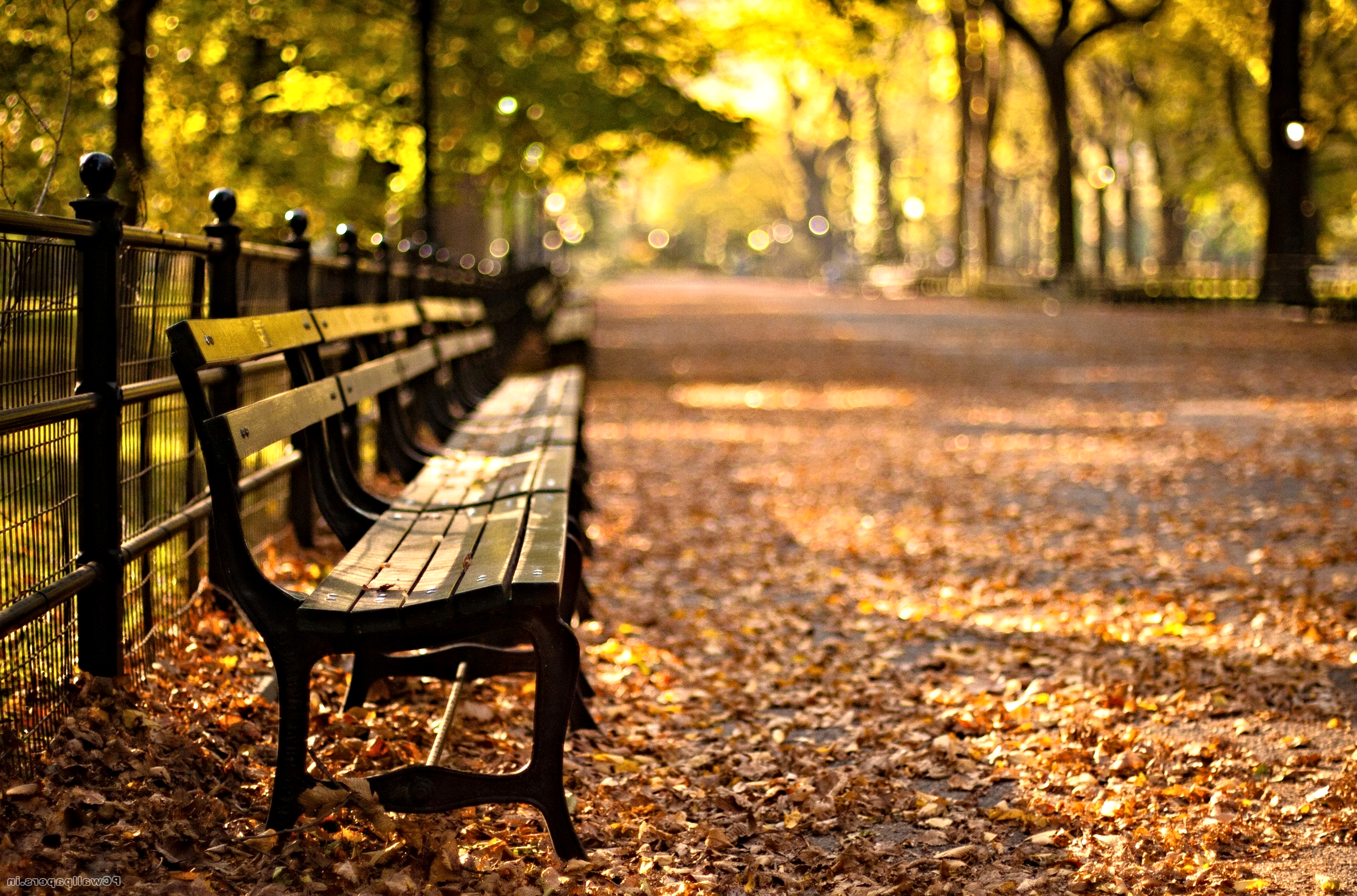 Central Park Iphone 6 Wallpaper The Welcome Blog Central Park The Secrets In The Heart