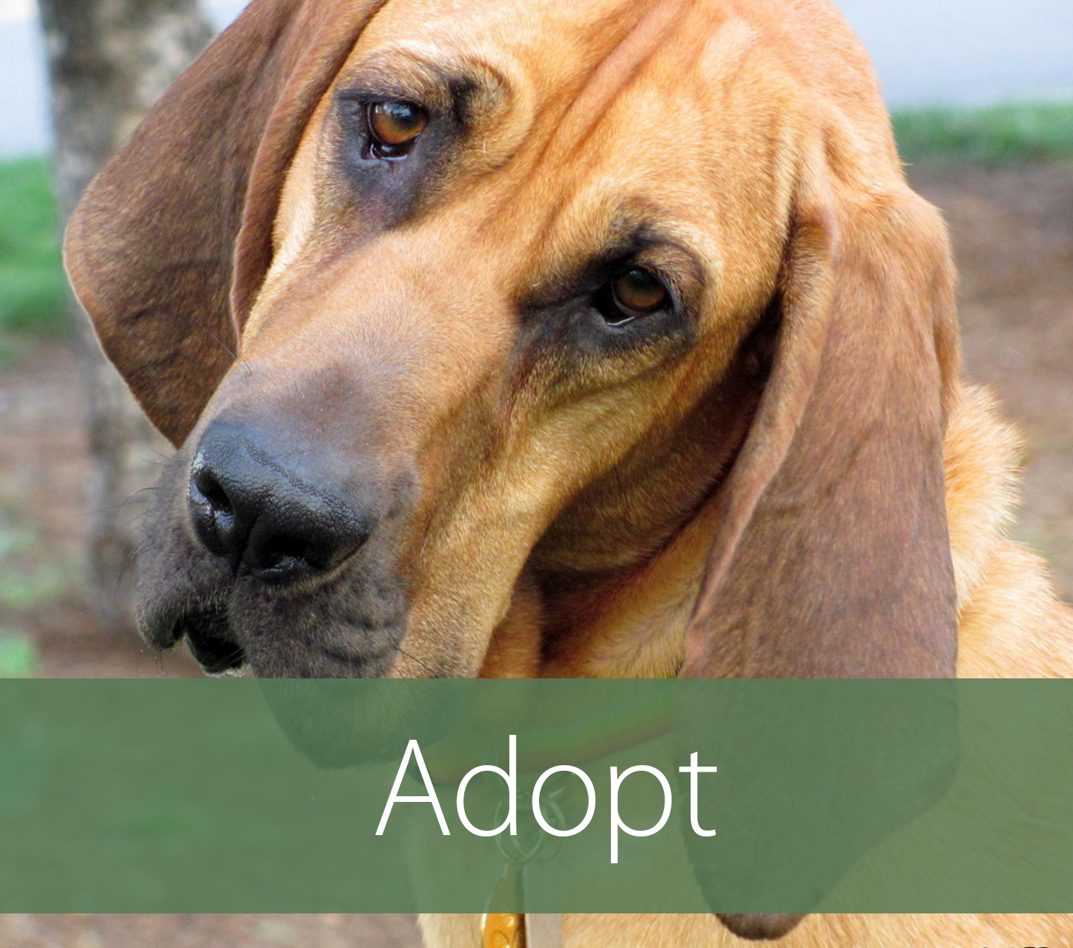 Rescue Dogs Puppies For Adoption Helping Hounds Dog Rescue