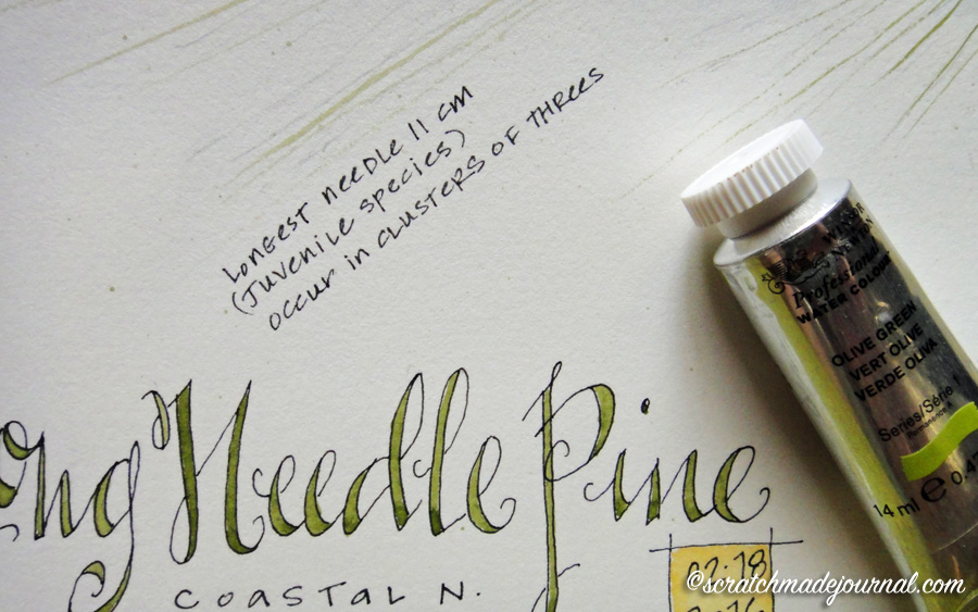 5 Tips for Setting up a Watercolor Palette \u2014 Scratchmade Journal