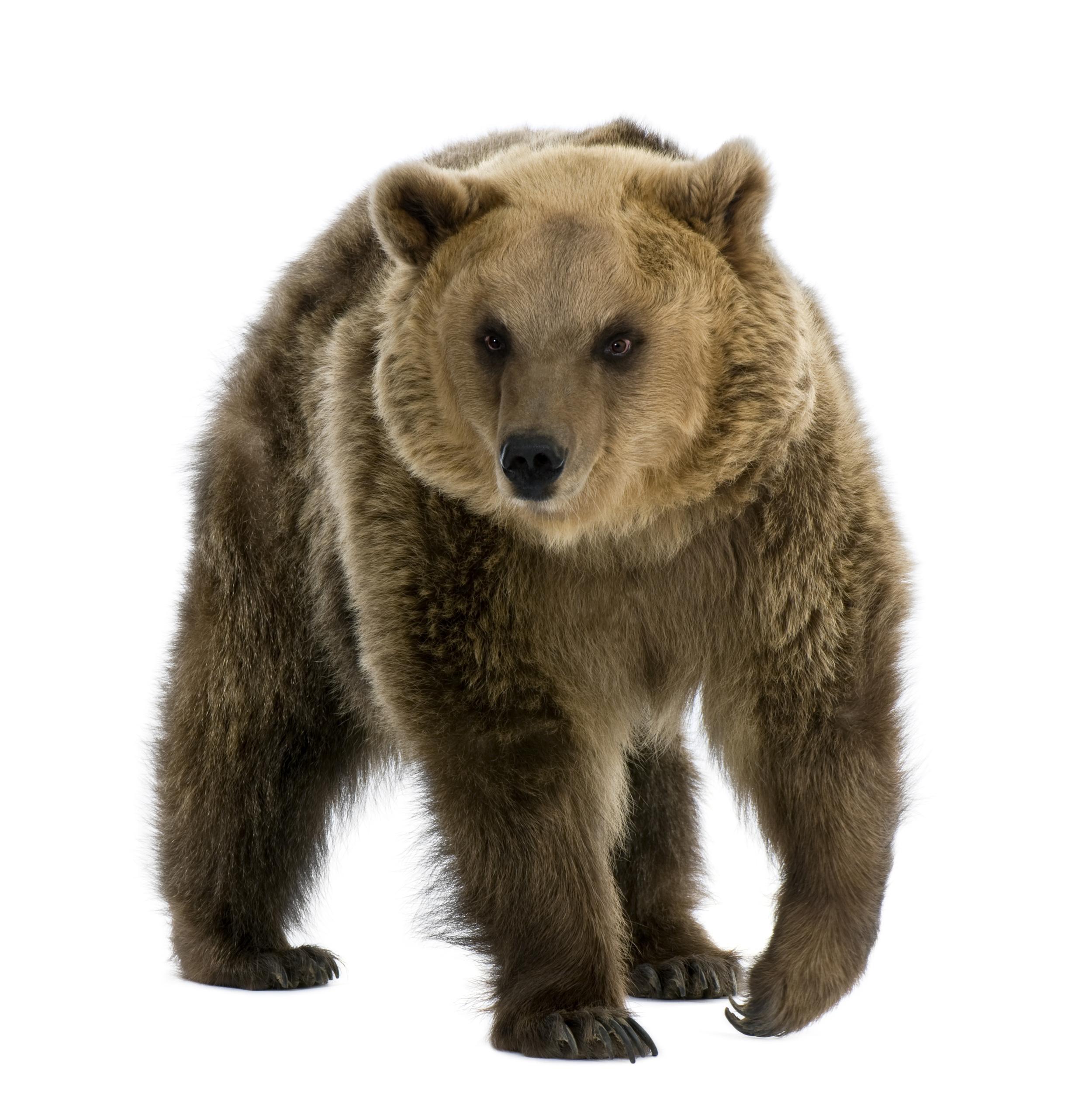 Animal Wallpaper Bear More Photos