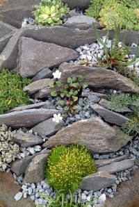 Rediscover the rockery!  Garden Answers