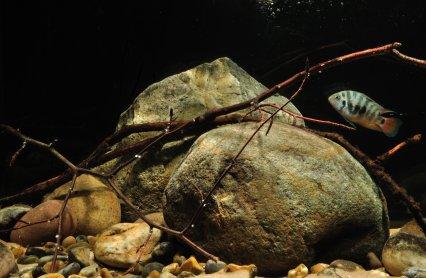 Create A Central American Mountain Stream Practical