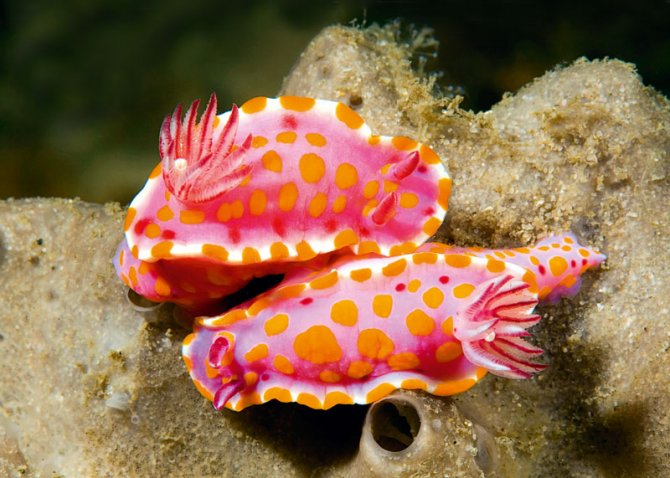 Cute Algae Wallpaper Sea Slugs The Great Taboo Practical Fishkeeping Magazine