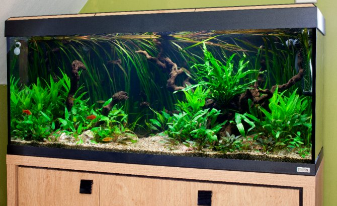 How to set up a temperate tank
