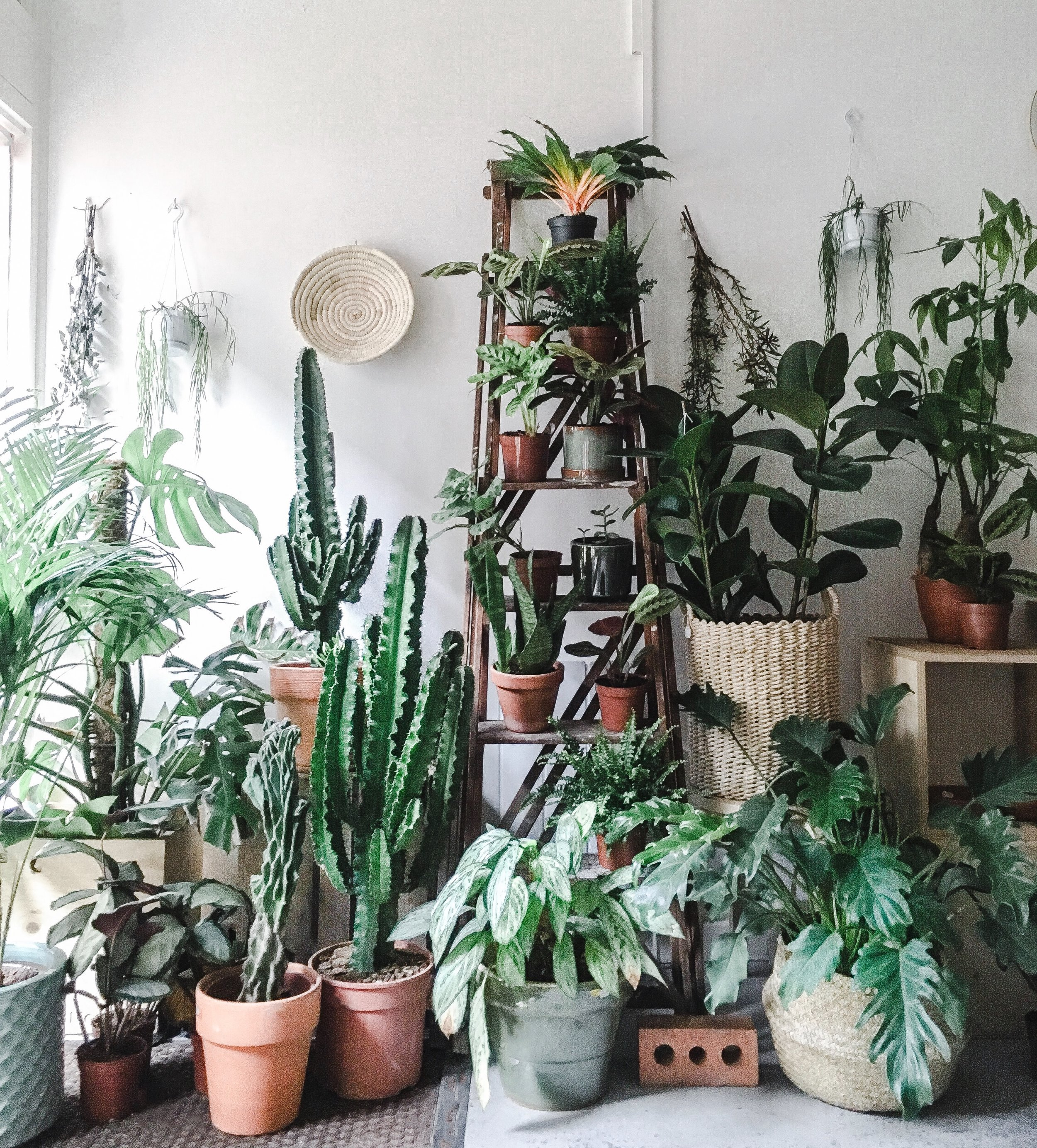 Unusual House Plants For Sale Where To Buy Houseplants In The Uk Jane Perrone