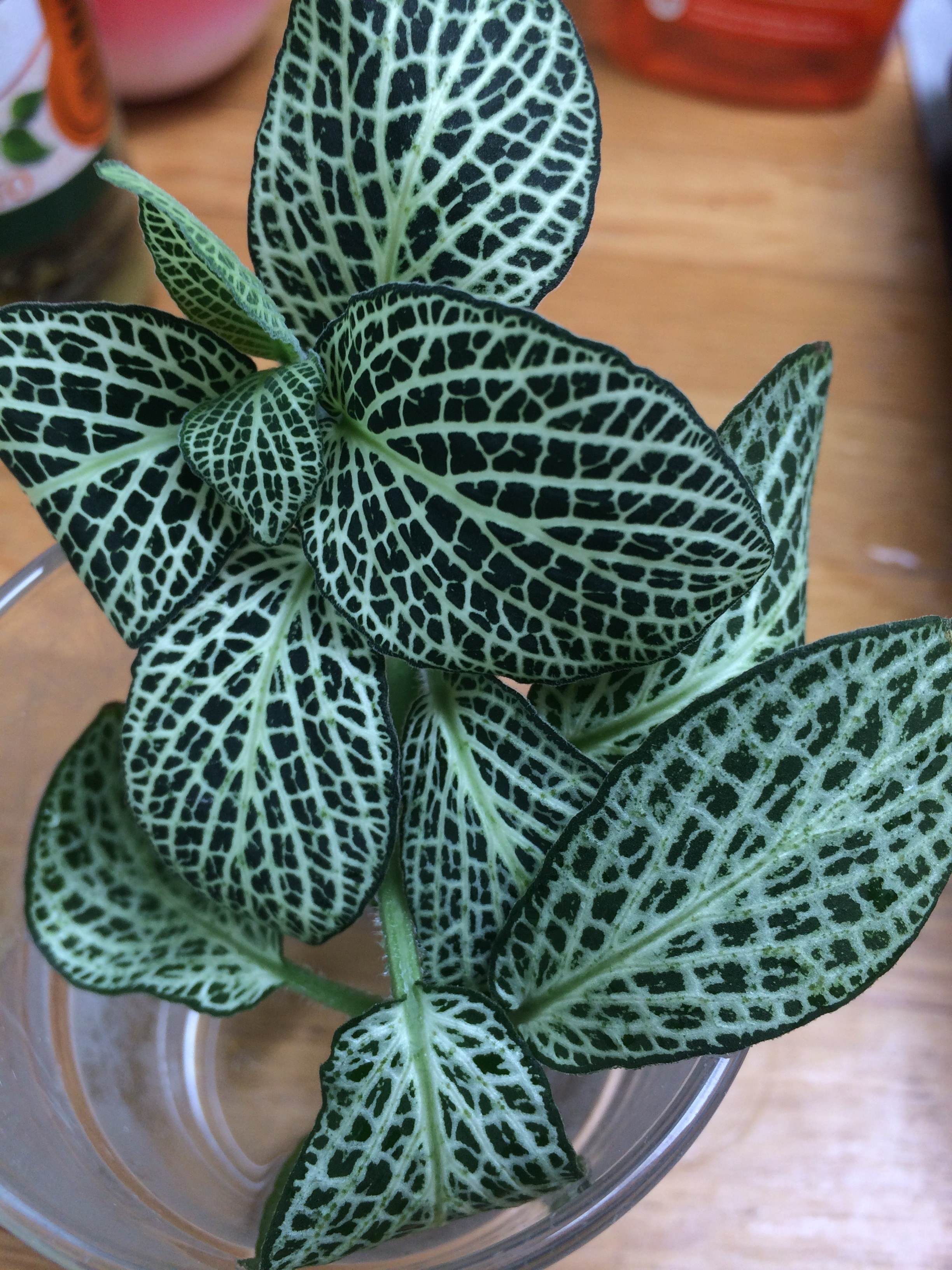 Unusual House Plants For Sale Where To Buy Houseplants In The Us Jane Perrone