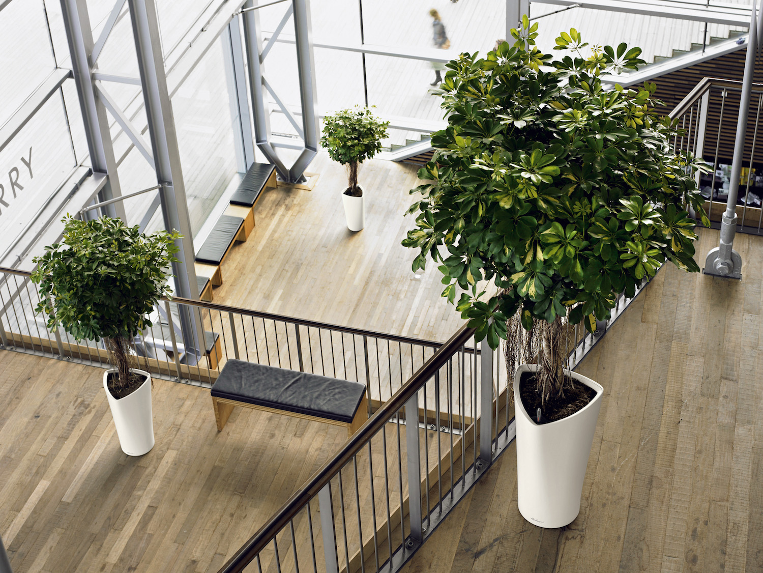 Indoor Plants For The Office Interior Plants Plantcare