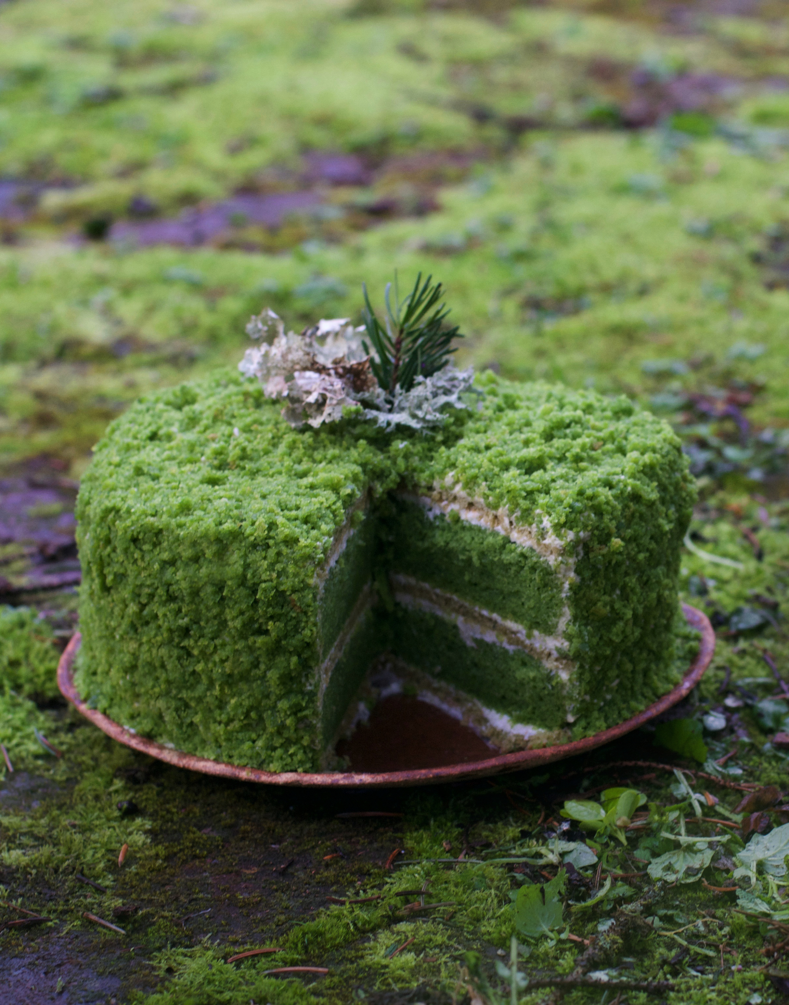 Tolle Desserts Nettle Cake An Ode To Moss Gazing The Wondersmith