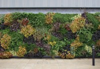 Indoor Living Wall Plants. living walls for any indoor or ...