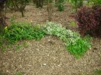 Oak Hill Gardens - Gardening Tips and Tricks, Product ...