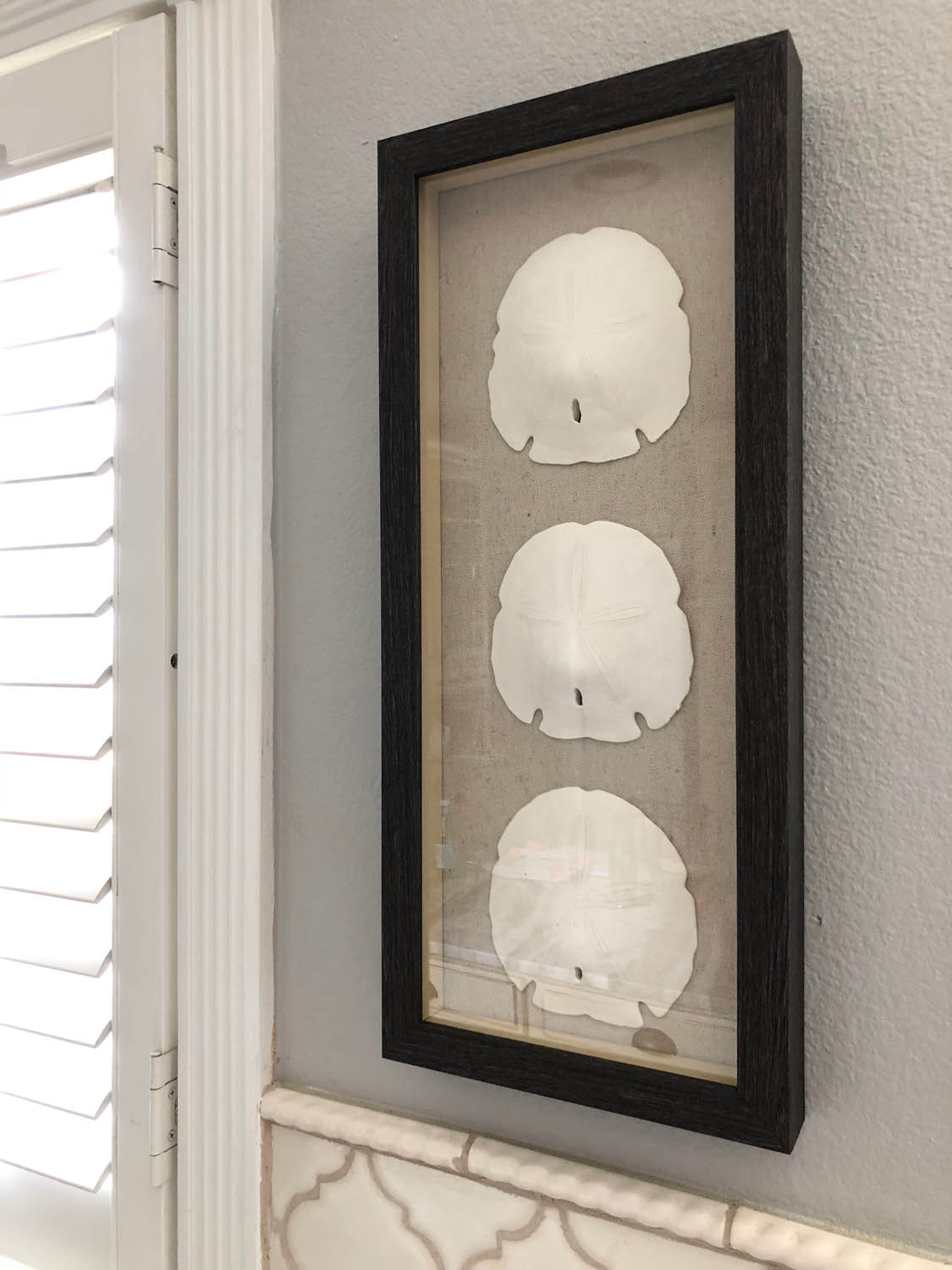 Genuine Seashells Sand Dollar Memory Collection Shadow Box Display Ideas Yarn Scissors Silk Shadow Box Ideas Army Shadow Box Ideas Diy Shadow Box Ideas houzz-02 Shadow Box Ideas