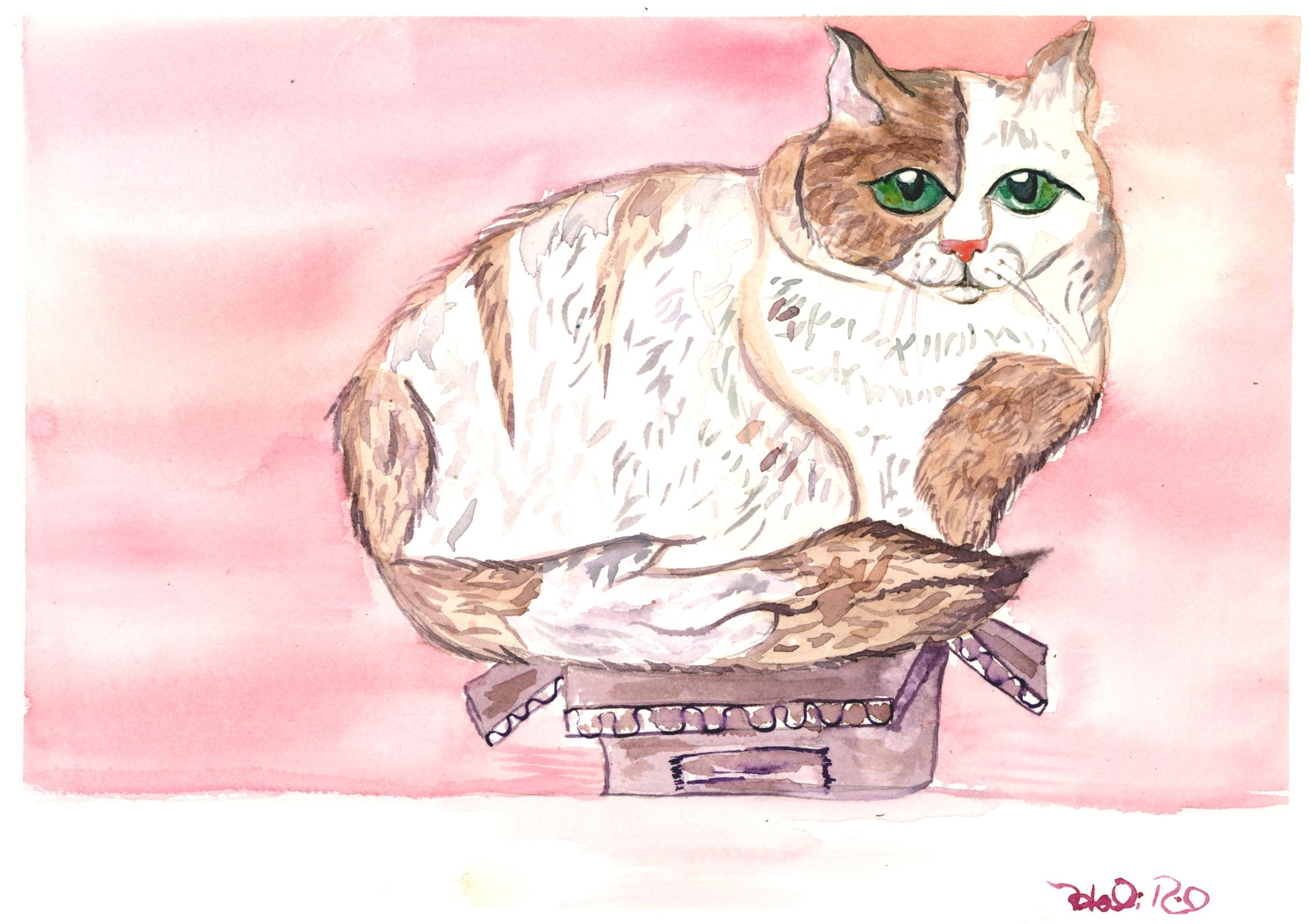 Cat-in-a-box\