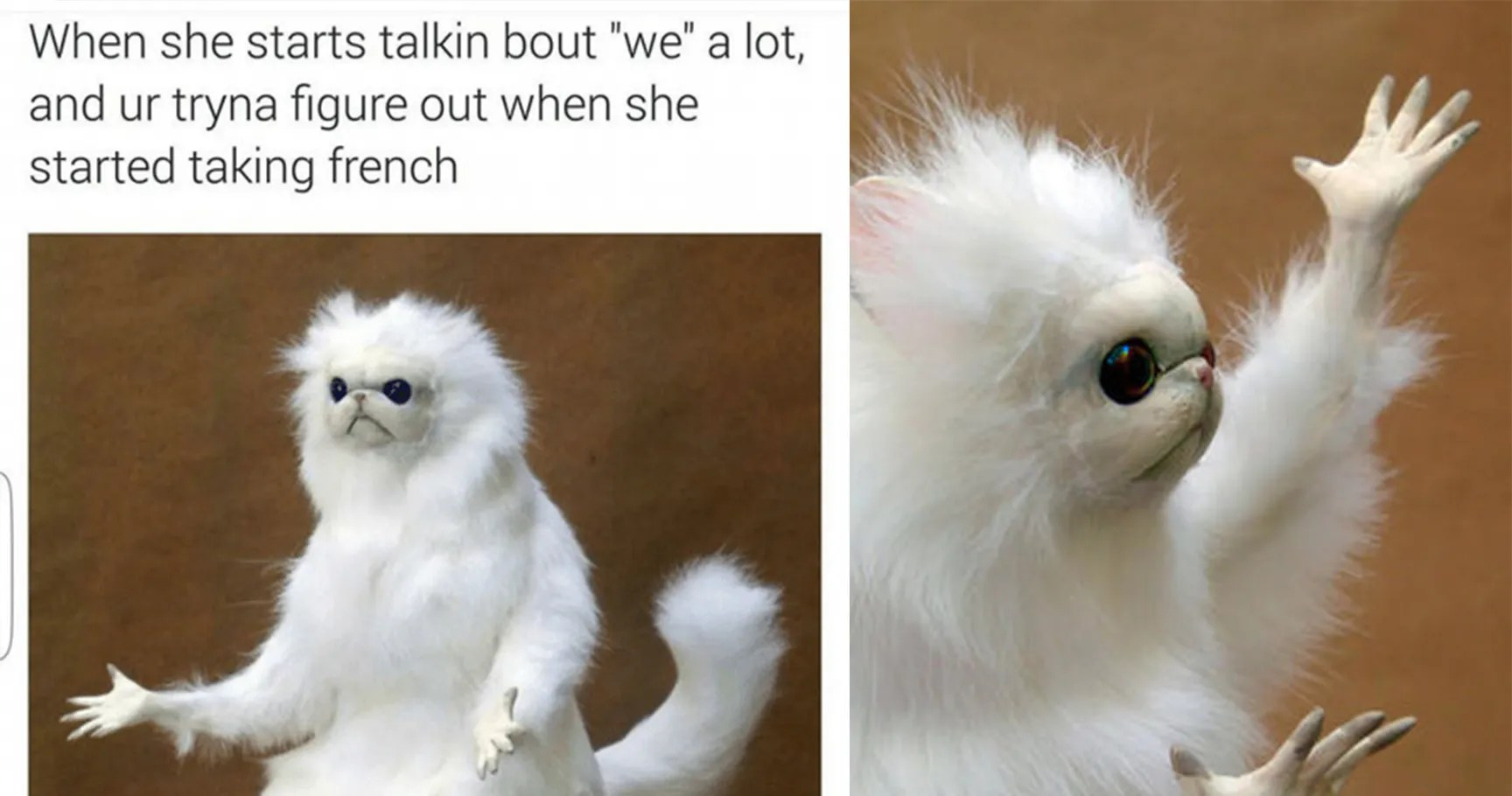 15 Hysterical Persian Cat Room Guardian Memes That Will