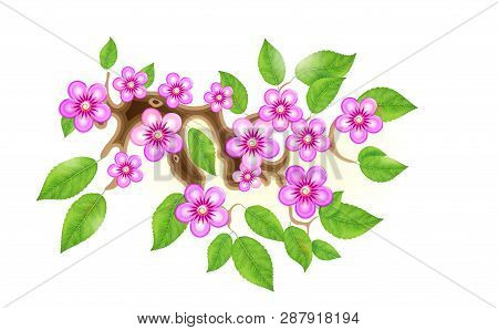 Sakura Branch Flowers Vector  Photo (Free Trial) Bigstock