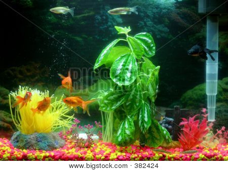 Colourful Fish Tank Stock Photo & Stock Images   Bigstock