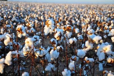 How wrinkle-free cotton was invented - Business Insider