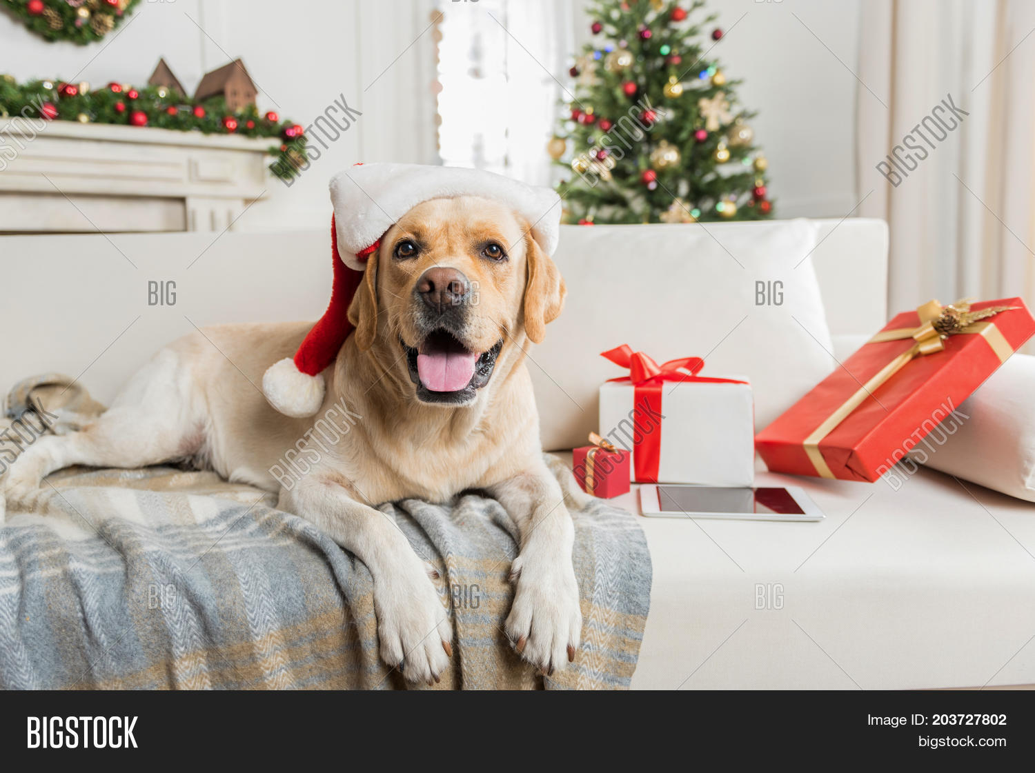 Big Sofa Fawn Four Legged Santa Image Photo Free Trial Bigstock
