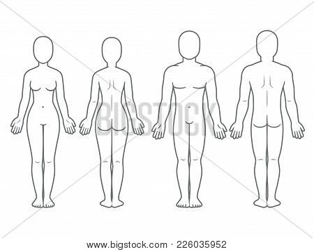 Male Female Body Vector  Photo (Free Trial) Bigstock
