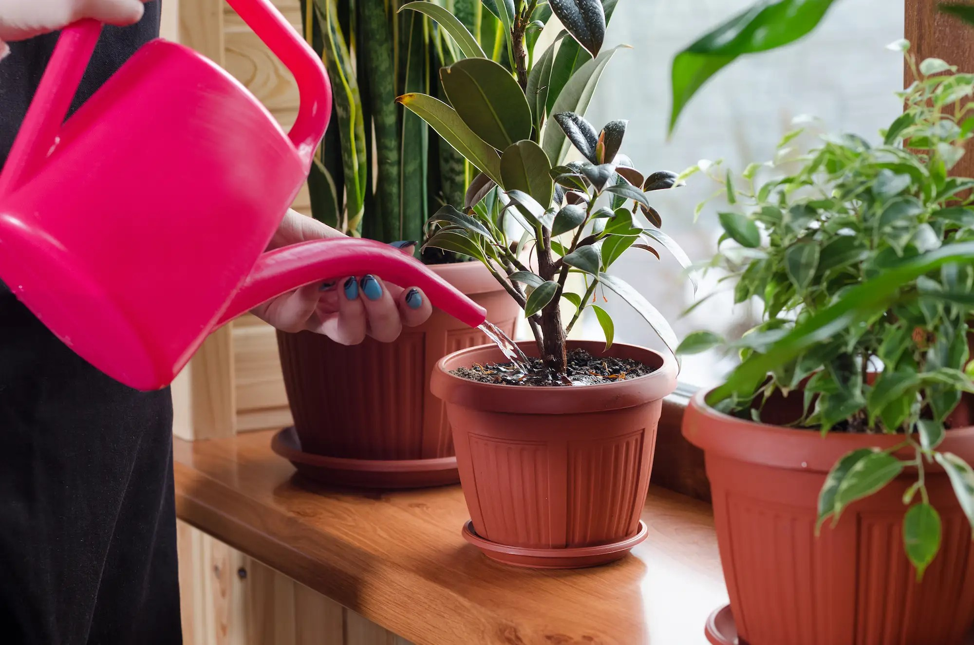In House Plant How Much To Water Houseplants Expert Trick For Keeping