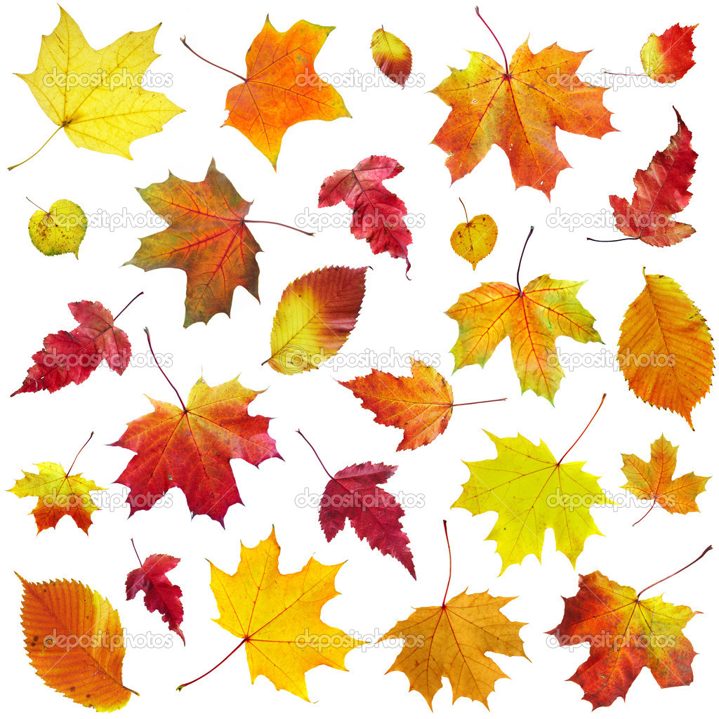 Falling Leaves Live Wallpaper Download Autumn Leaves On A White Background Stock Photo
