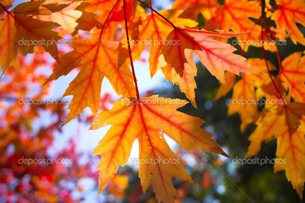 Fall Trees Wallpaper Fall Background Stock Photo 169 Georgeburba 2365783