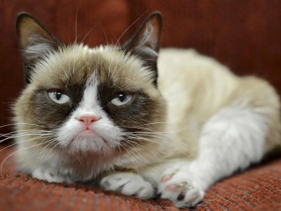 Grumpy Cat Has Earned Her Owner Nearly $100 Million In Just 2 Years - Business Insider