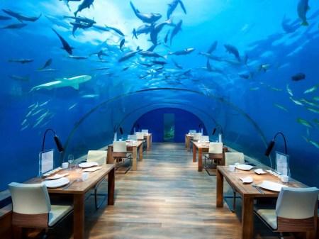 Underwater Dining In Florida
