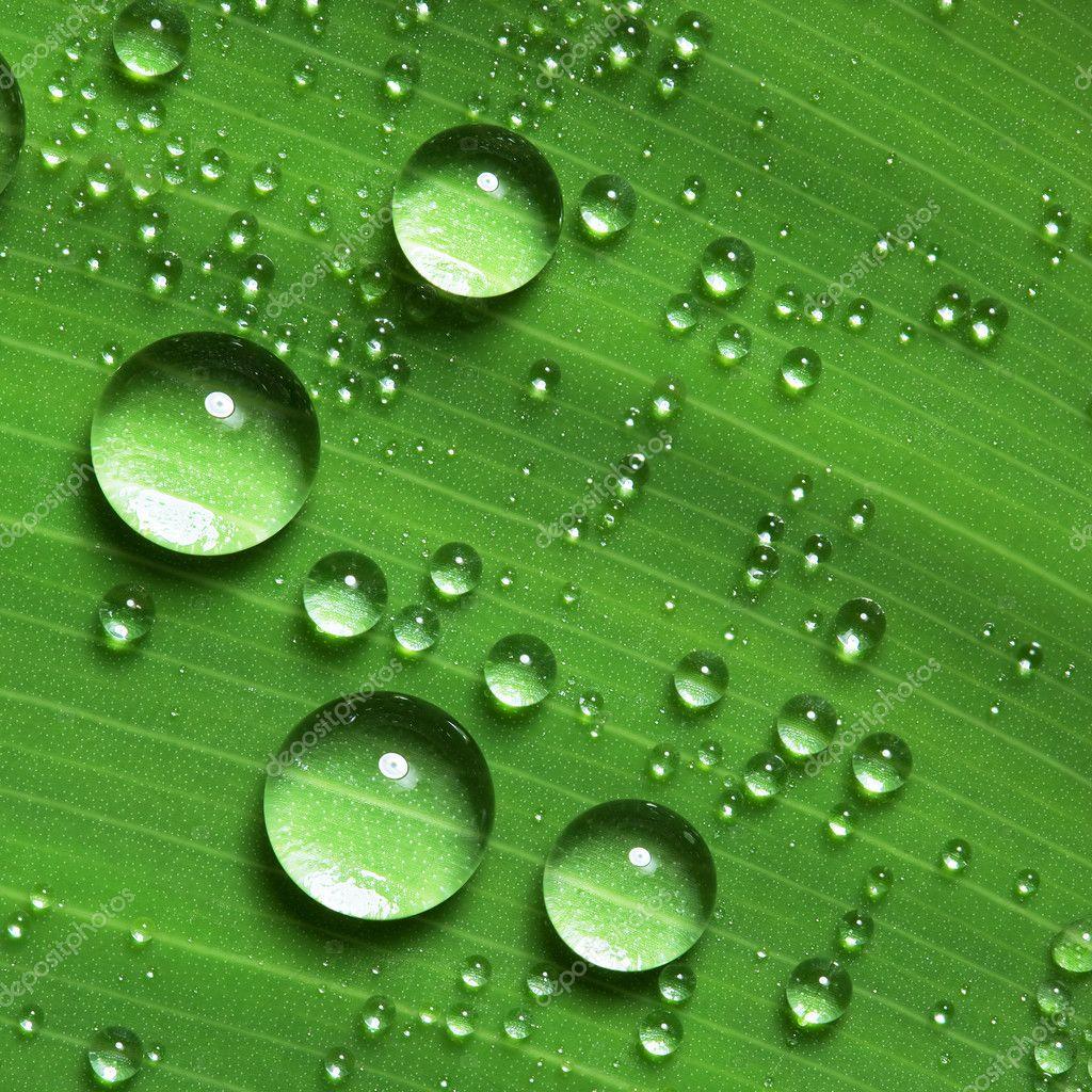 Water Falling Live Wallpaper Download Water Drops On Fresh Green Leaf Stock Photo 169 Irochka