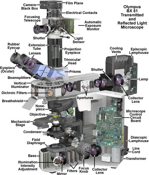 olympus optical microscope - Zorayayodhya