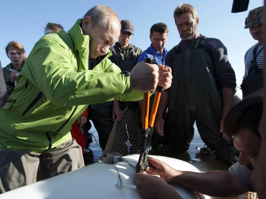 Here he is, attaching a satellite tracking device to Dasha shortly after.